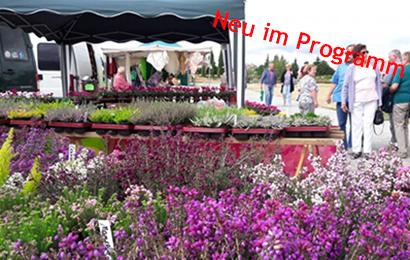 herbst pflanzen boerse 1